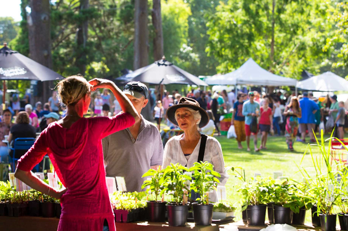 hastings-top-10-holiday-park-attraction-hawkes-bay-farmers-market
