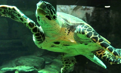 national-aquarium-of-new-zealand
