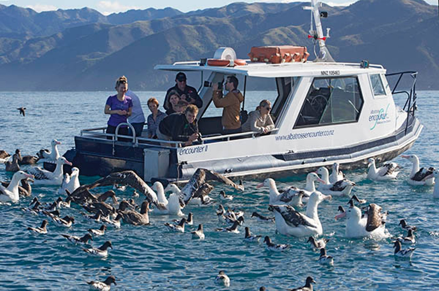 kaikoura holiday park attractions