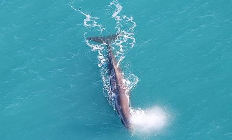 kaikoura holiday park whale tour