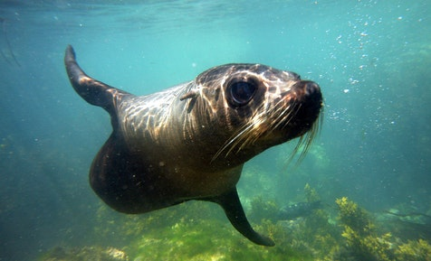 kaikoura holiday park seal tour